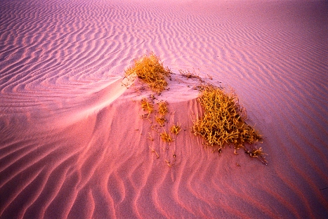 Detail_Mungo National Park_NSW